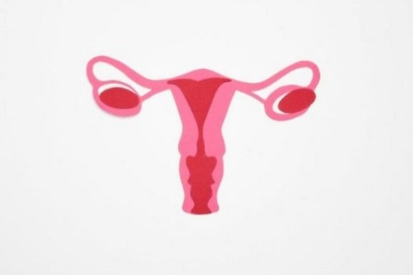 India, EU discuss possibility of opening new areas in trade